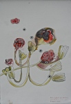Botanical Illustration: Geranium