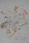 Botanical Illustration: Rosemary