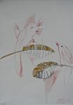 Botanical Illustration: Rubber plant